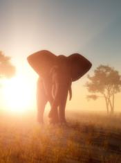 02 Afrique