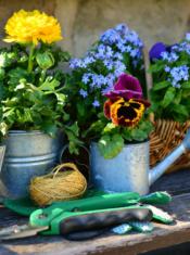 05 Fleurs Et Plantes